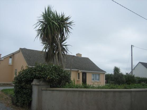Ireland2007pics 288