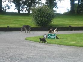 Ireland2007pics 326