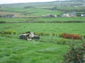 Ireland2007pics 344
